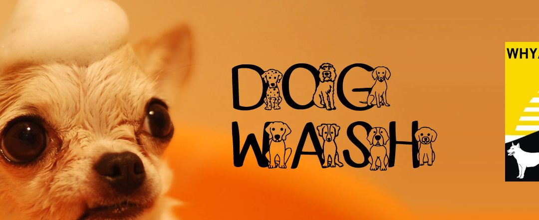 Dog Wash April 2019