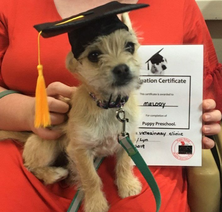 All puppies should graduate from puppy school.