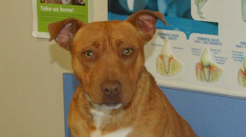 Duke - Whyalla Vet Adoption Success